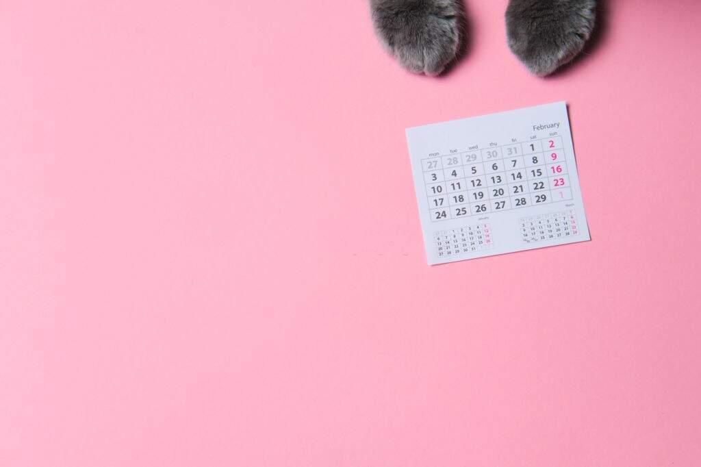 Agenda para Pet Shop